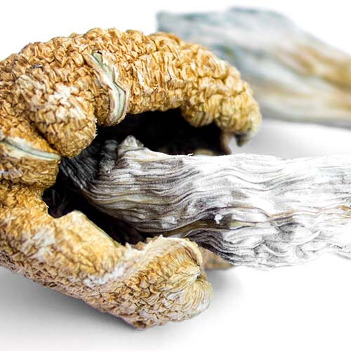 Understanding Psilocybin: Effects, Neurobiology, and Therapeutic Approaches